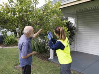 Queensland fruit fly surveillance