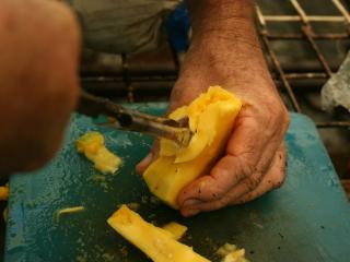 Opening mango seed husk to remove embryo