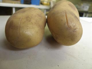 Mechanical damage to the tuber in the form of cracks and splits provide ideal surfaces for bacterial infection to occur