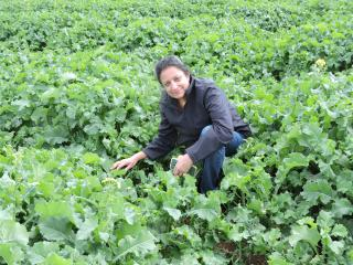 DAFWA research officer Dr Ravjit Khangura in a canola trial plot at New Norcia. Research has found the timing of fungicide treatments is critical to controlling the fungal disease sclerotinia stem rot.