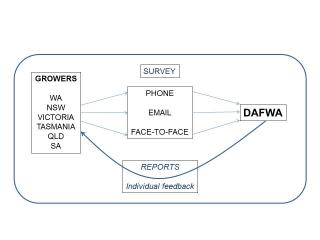 Survey graphic showing information flow