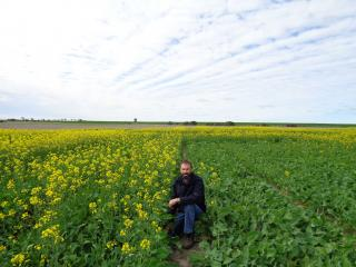 Department of Agriculture and Food research officer Martin Harries will discuss early sowing of canola at Grain Research Updates events at Perth and Merredin.