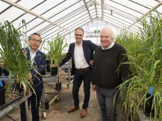 Three men standing in a glasshouse