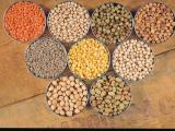 Photo showing mature grain of various pulse crops