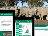 Example screens from the iPad app 'Sheep Condition Score'.