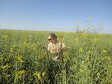 Nadine Hollamby in a canola crop