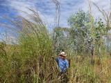 Man standing next to gamba grass infestation.