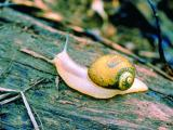 A green snail on a log