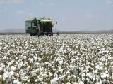 Harvesting cotton in the ORIA