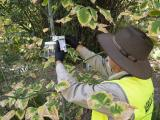 Checking traps as part of the Qfly eradication program.