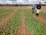 DAFWA Research Officer Bob French and Sally Sprigg in Merredin nitrogen trial