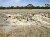 Dispersing (sodic) waterlogged soil