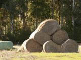 Bales of old hay and silage in a paddock
