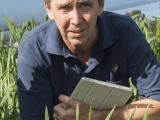 DAFWA officer in wheat plot