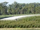 White permanent bird netting at Matijari orchards in Manjimup