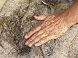 browsing ants covering someone's hand