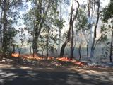 Leaf litter burn near vineyard