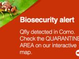 Qfly banner alert