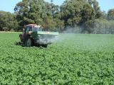 Applying fertilisers after planting to potato crops on sands