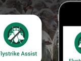 Flystrike Assist home screen