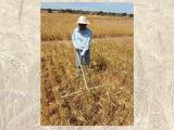Research officer Shahajahan Miyan  in the continuous wheat trial in Merredin