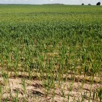 Header rows have less symptoms