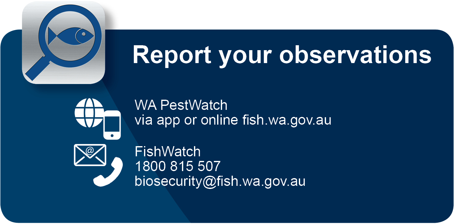 FishWatch reporting contact details