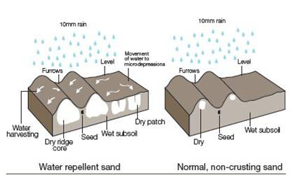 Water harvesting from ridges of dry, water repellent sand, compared with a level surface and non-repellent sand