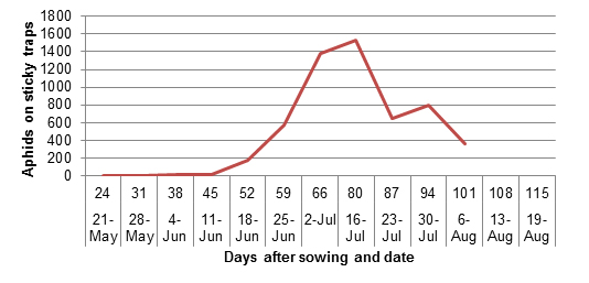 Number of aphids on 4 sticky traps, located at each corner of the trial site