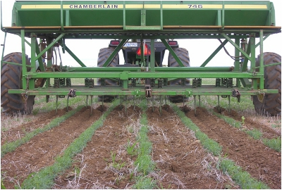 Interrow cultivation to kill weeds
