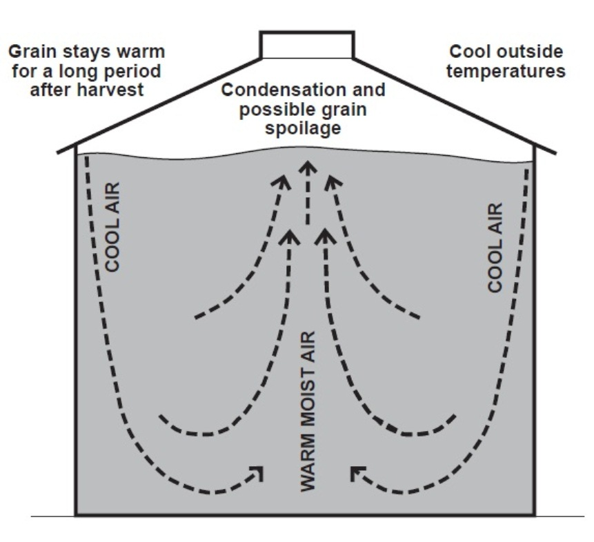 Diagram showing the cool dry air flowing down the inside wall of a silo and warm moist air flowing up through the centre causing condensation and possible grain spoilage