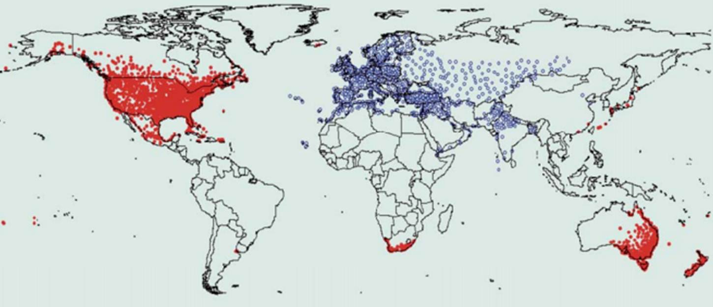 Worldwide range of the common starling with natural populations in blue and introduced populations in red