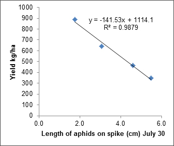 Figure 4. Relationship between average length of cabbage aphid on spikelet to yield