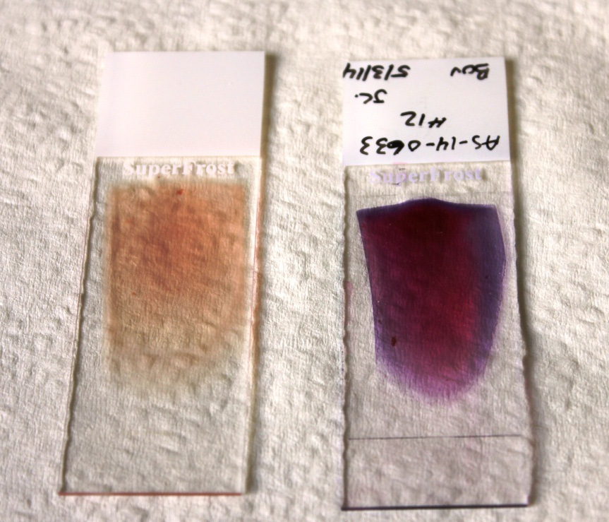 preparation of films for staining