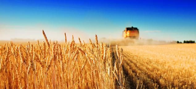 Harvester in crop