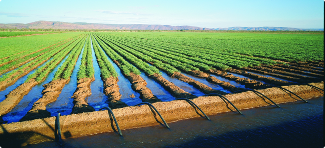 Photo showing irrigated chickpea seed production in the Ord Irrigation Area of Western Australia