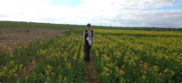 Research Officer Sally Sprigg in Buntine nitrogen trial