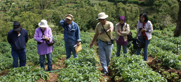 Indonesian extension officers receive training in monitoring for insect pests of potato crops