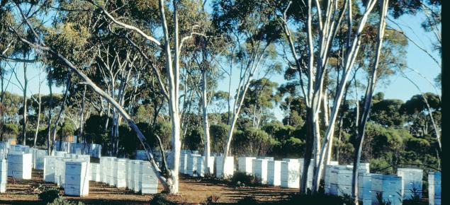 Beekeeping site in Western Australia