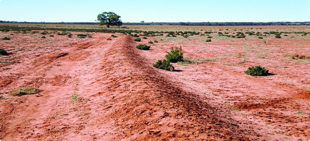 Photo of W drain showing spoil in the centre