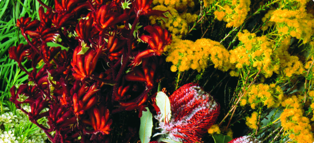 Collectiion of Australian wildflowers including banksia, Gerladton wax and kangaroo paw