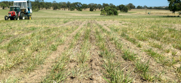 Photo showing cone seeder sowing serradella into perennial pasture.