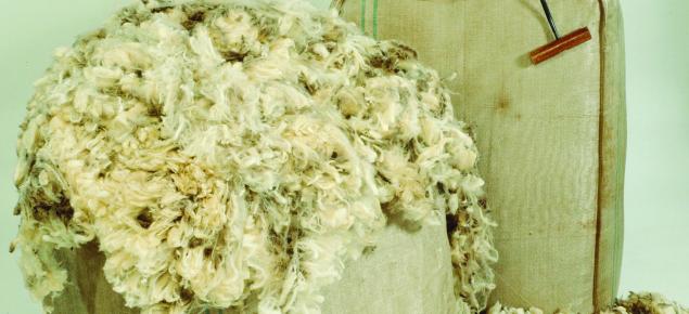 Bale of wool