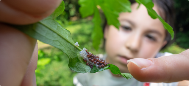 kids observing insect eggs
