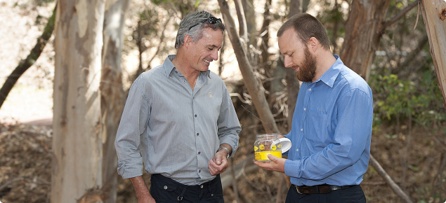 Local governments are joining the Adopt-a-Trap program to monitor European wasps in Western Australia