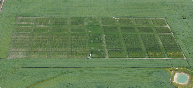 An aerial shot of the National Frost Initiative trial site at Dale, Western Australia
