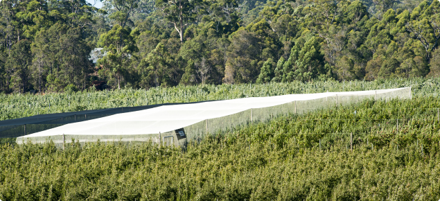 Black and white netted area at the demonstration site in Manjimup