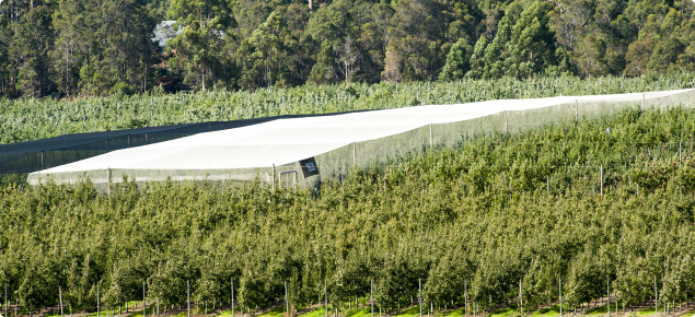 Netting apple orchards, black or white net - what is the