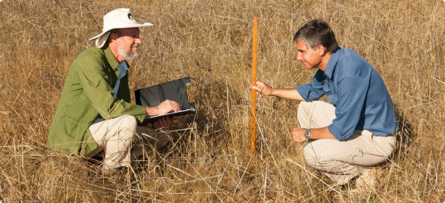 Photograph of two DAFWA officers measuring grass height for assessing pastoral condition