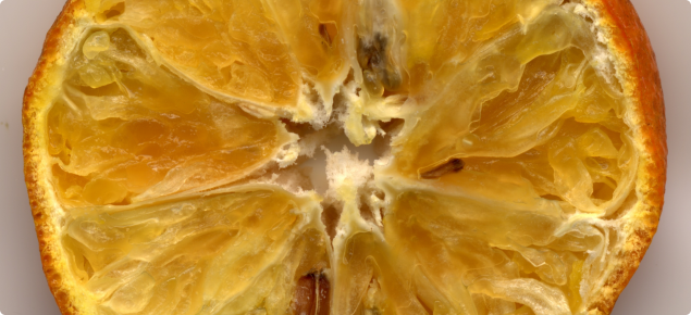 Fruit symptoms of dry rot. Photo courtesy of Dr Roger Shivas, DPIF 2005.